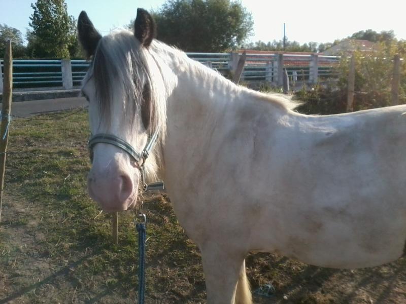 chevaux, rencontre,vacances... Photo012