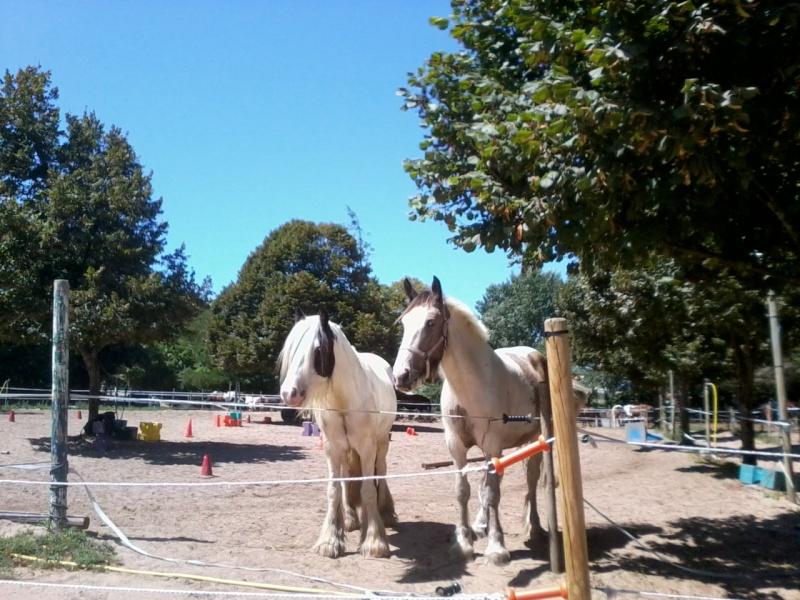 chevaux, rencontre,vacances... Photo013