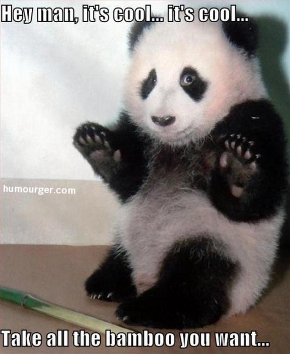 Les pandas sont nos amis, il faut les aimer aussi ! Panda10