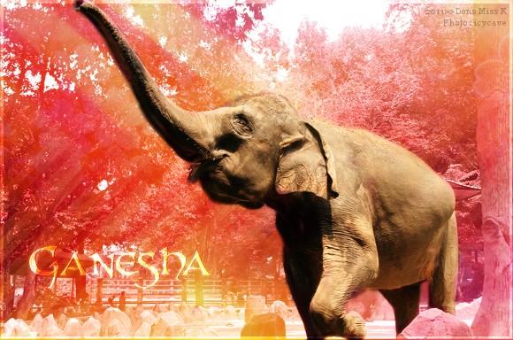Ganesha - Femelle - Elephant - Adulte Ganesh11