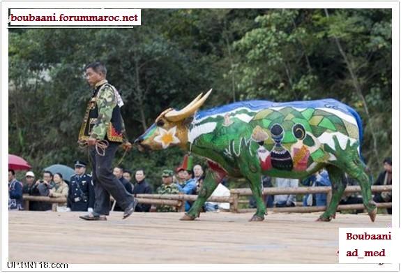 مهرجان الرسم على أجسام الثيران Ousooo11