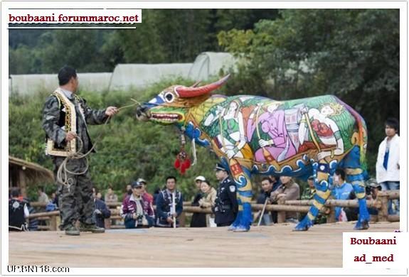 مهرجان الرسم على أجسام الثيران Ousoou18