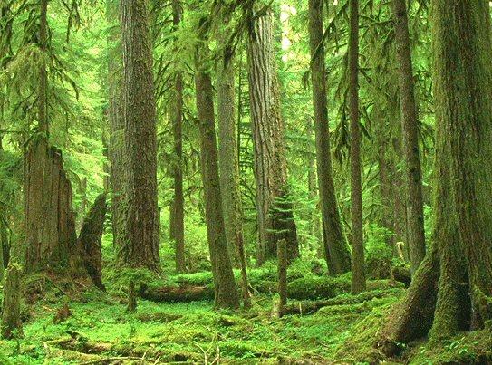 La selva oscura | Dante Alighieri (Inferno, canto I) Forest10