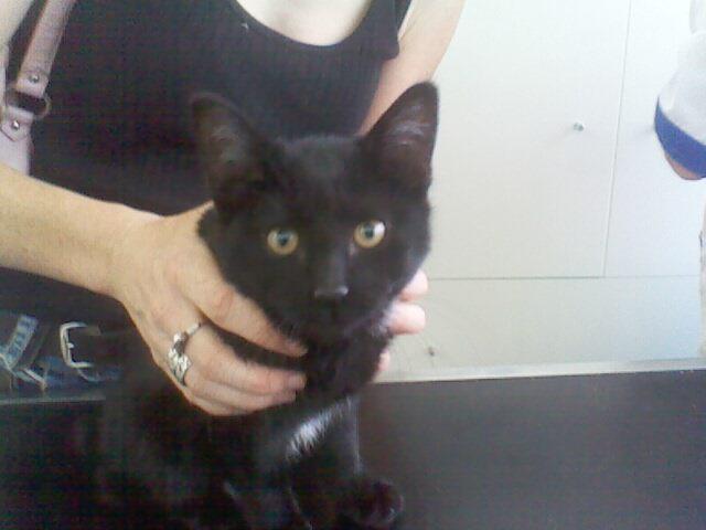 6 chatons de 2mois a adopter 11092010