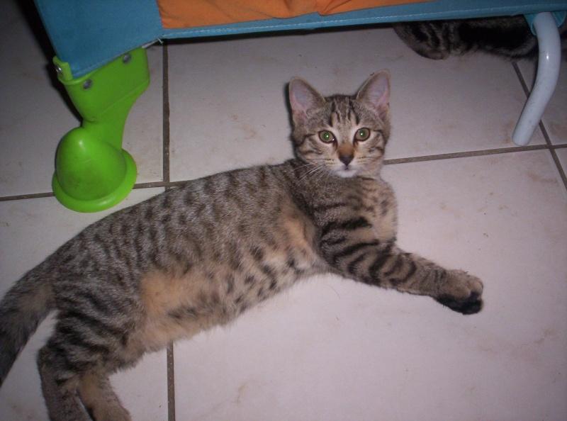 6 chatons de 2mois a adopter Chaton12