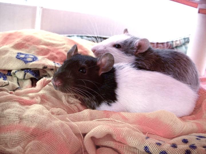 Les deux ratous :) 22789911