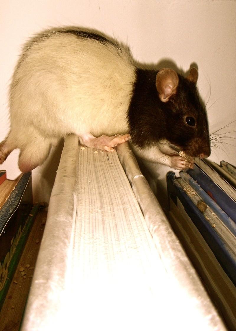 Les deux ratous :) Dscn8611