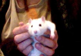 Les deux ratous :) Photo_18