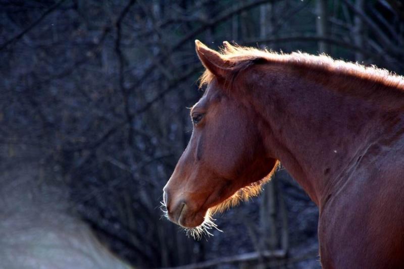 Les Juments du MH West Ranch 20070310
