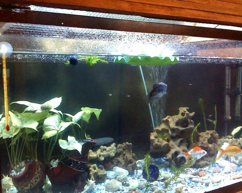ma nouvellr aquarium 170L fabrication maison ^^ Snapsh14