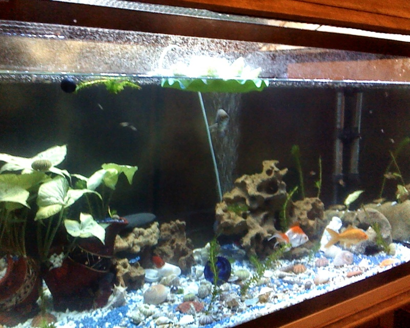 ma nouvellr aquarium 170L fabrication maison ^^ Snapsh15