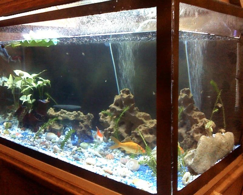 ma nouvellr aquarium 170L fabrication maison ^^ Snapsh16