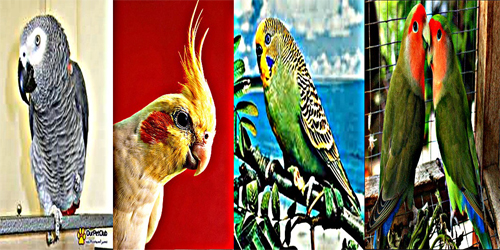 www.Birdsworld.forumarabia.com