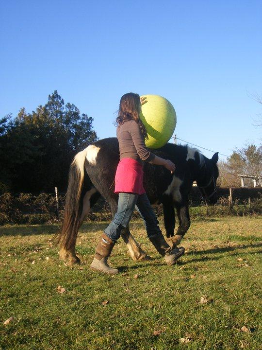 les ballons pour chevaux, enfin il s'y ait intéressé !!!! ;) 18089910