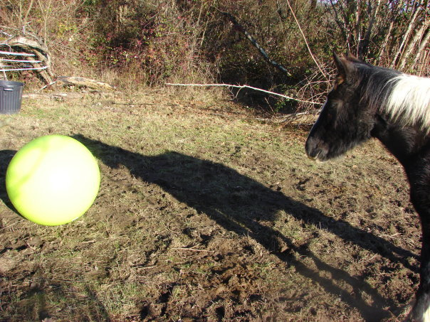 les ballons pour chevaux, enfin il s'y ait intéressé !!!! ;) 18360_10