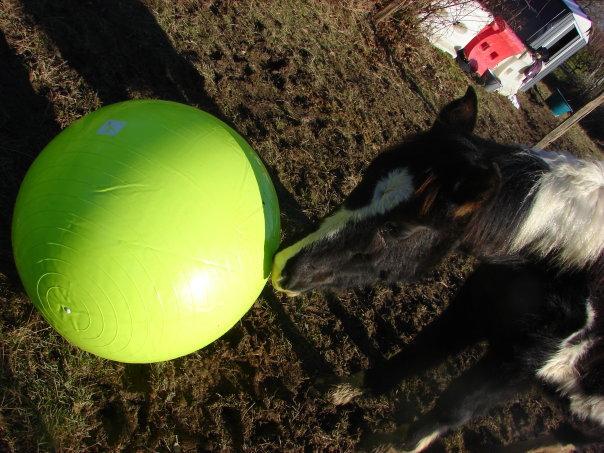 les ballons pour chevaux, enfin il s'y ait intéressé !!!! ;) 18360_11