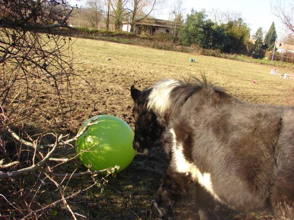 les ballons pour chevaux, enfin il s'y ait intéressé !!!! ;) 18360_12