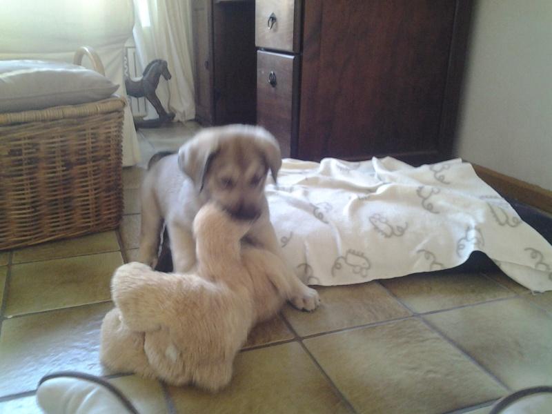 Puppie Patou Foto0117