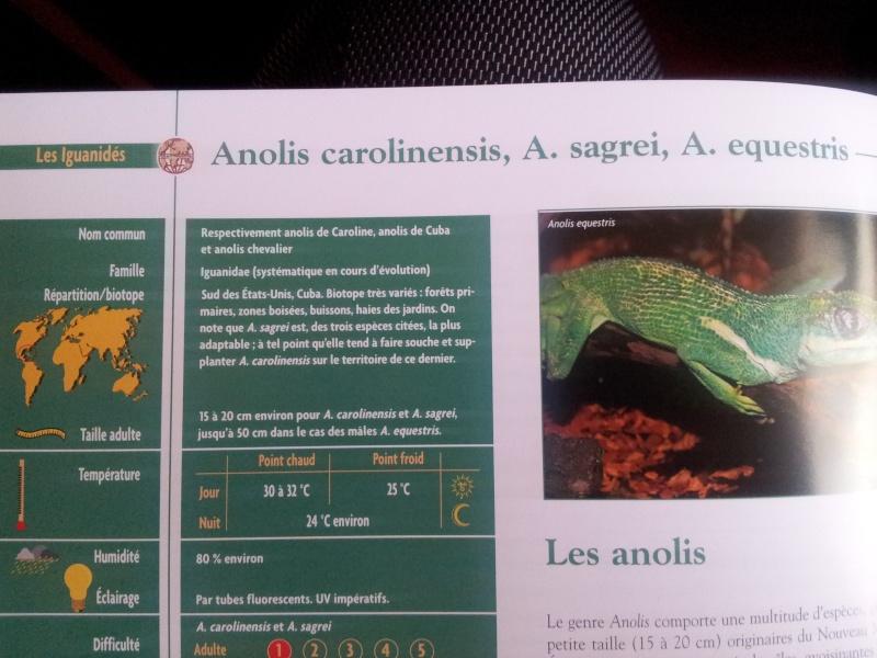 petit iguane (recherche) 20120515