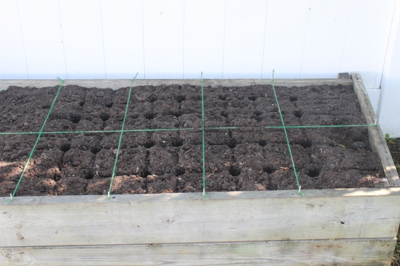 When to plant garlic and shallots in the fall, and other winter questions Img_5722