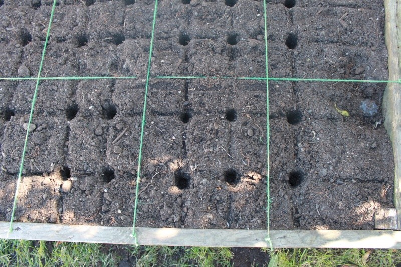 When to plant garlic and shallots in the fall, and other winter questions Img_5723