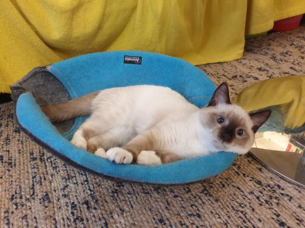 Nos chats à l'adoption 016a0e11
