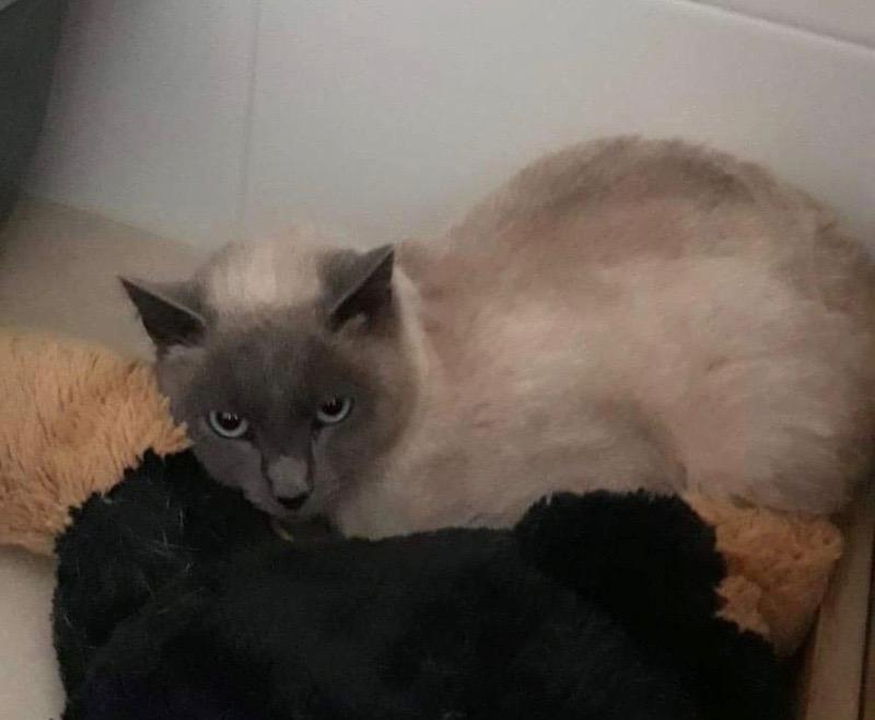 Nos chats à l'adoption 05265d10