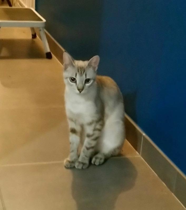 Nos chats à l'adoption 11945510