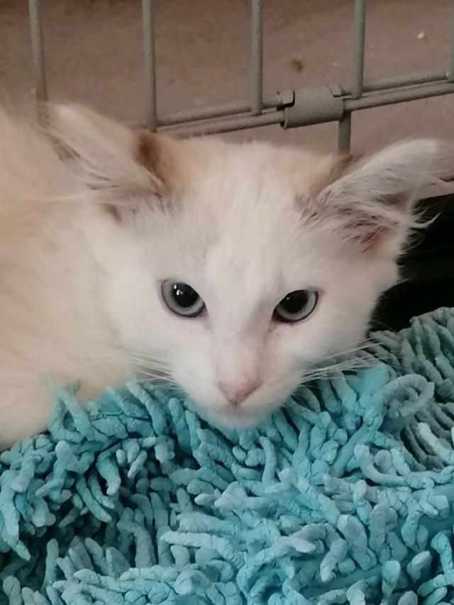 Nos chats à l'adoption 11989011