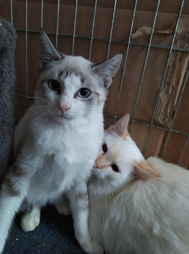 Nos chats à l'adoption 12027110
