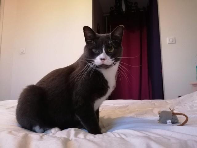 Nos chats à l'adoption 12713810
