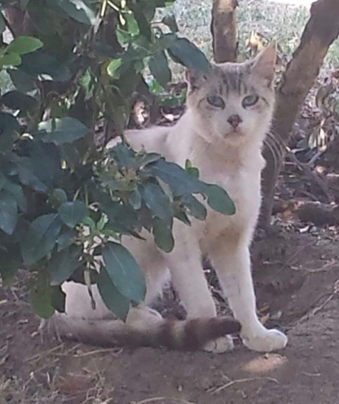 Nos chats à l'adoption 12756910