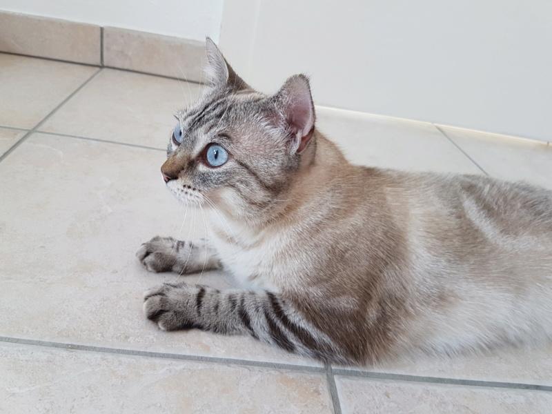 Nos chats à l'adoption 20190710