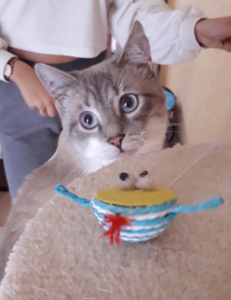 Nos chats à l'adoption 20191110