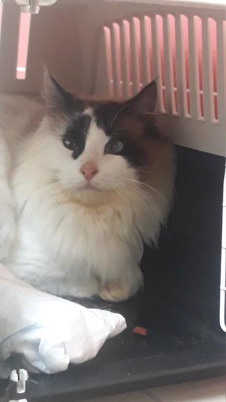 Nos chats à l'adoption 20200210