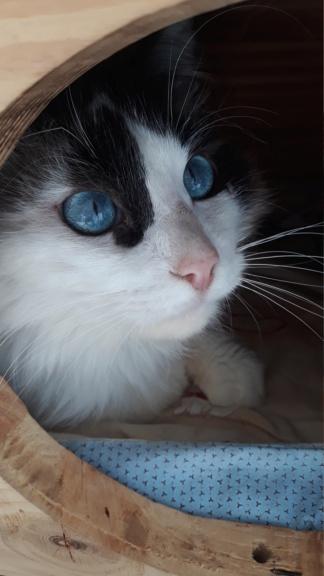 Nos chats à l'adoption 20200412