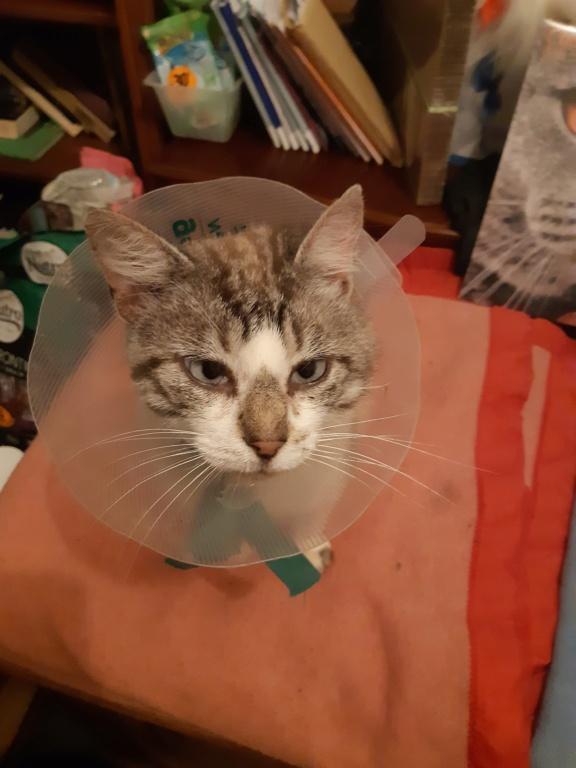 Nos chats à l'adoption 20200911