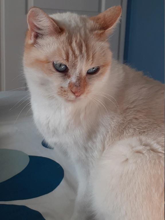 Nos chats à l'adoption 20210110