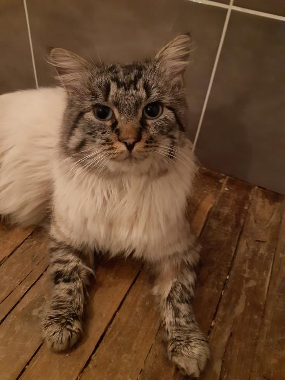 Nos chats à l'adoption 20210111