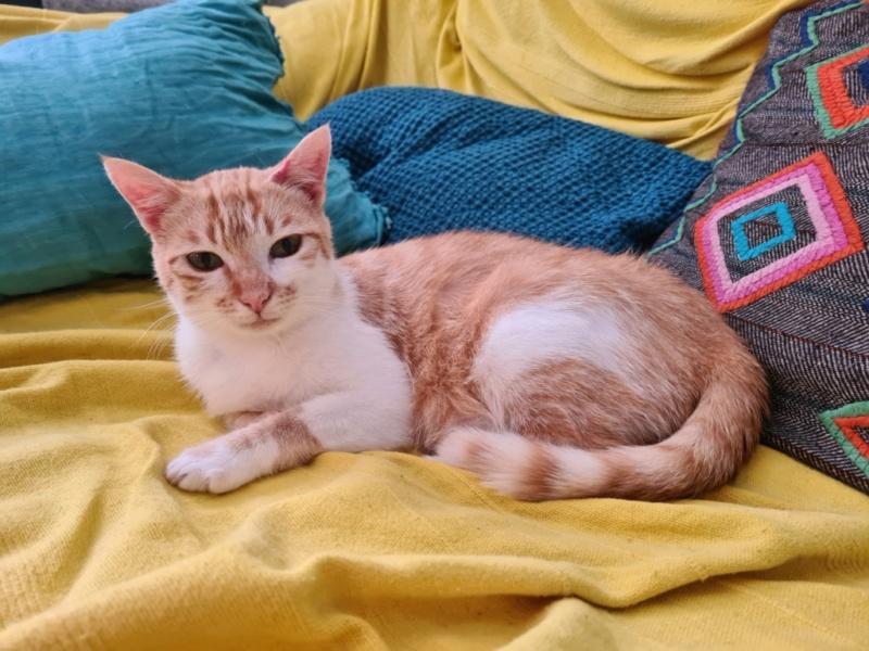 Nos chats à l'adoption 20210611