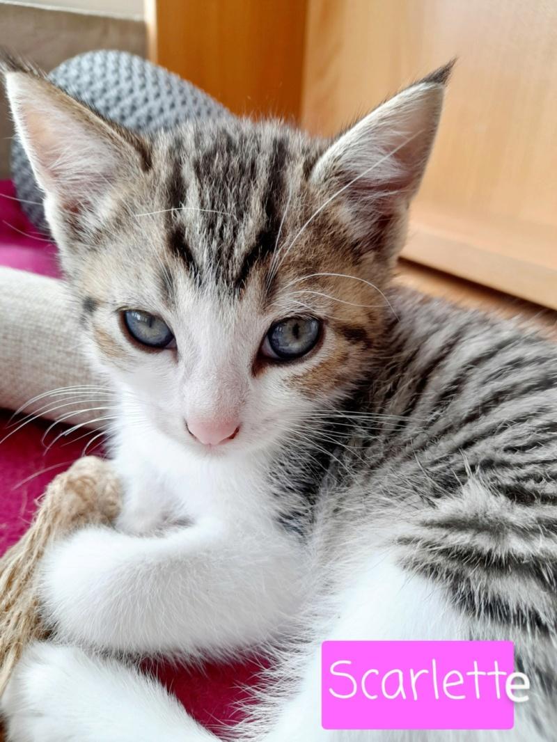 Nos chats à l'adoption 20210913