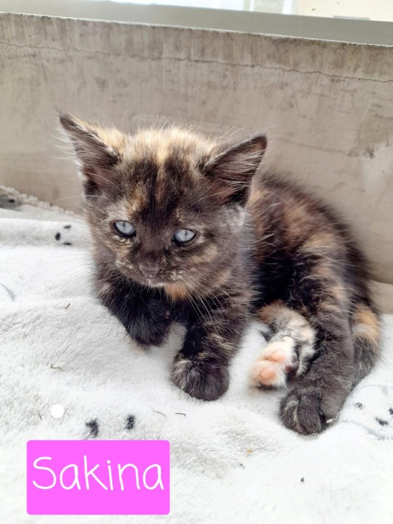 Nos chats à l'adoption 20210914