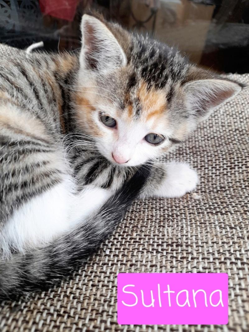 Nos chats à l'adoption 20210915