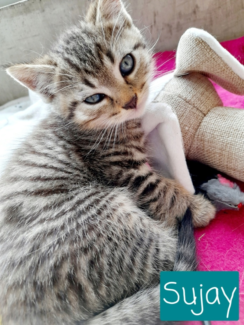 Nos chats à l'adoption - Page 2 20210916
