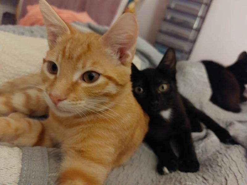 Nos chats à l'adoption 23276810