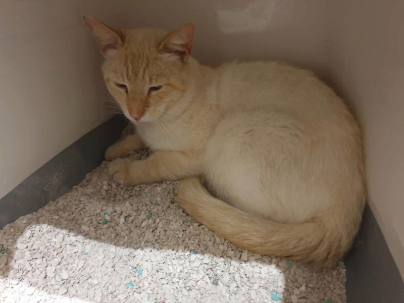 Nos chats à l'adoption 2e4b5712