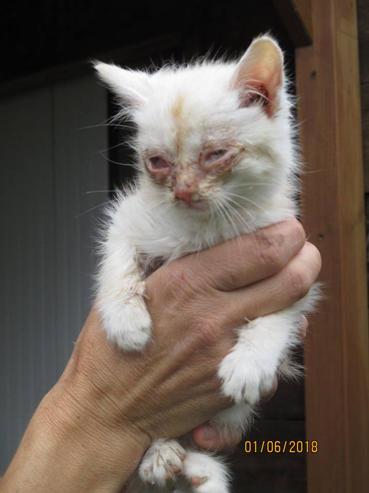 Photos des chats sauvés, avant/après - Page 9 34457110