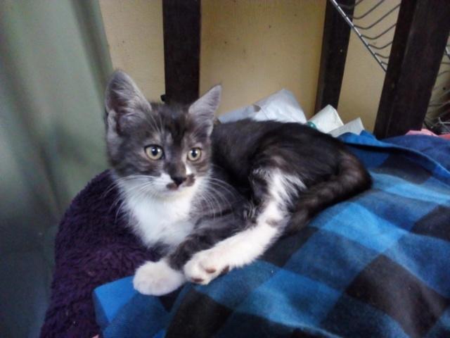Nos chats à l'adoption 3870f310