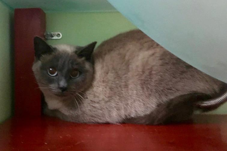 Nos chats à l'adoption 42af7e10