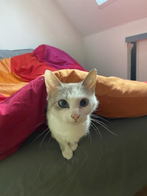 Nos chats à l'adoption 46dae810